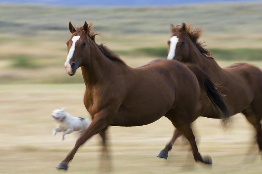 Enjoy Portugal Horse Riding Holidays http://www.enjoyportugal.eu/#!horse-riding-in-portugal/c1tl3