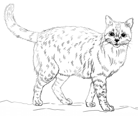 Realistic Cat Coloring Page From Cats Category Select From 25105 Printable Crafts Of Cartoons Nature Cat Coloring Page Animal Coloring Pages Kittens Coloring