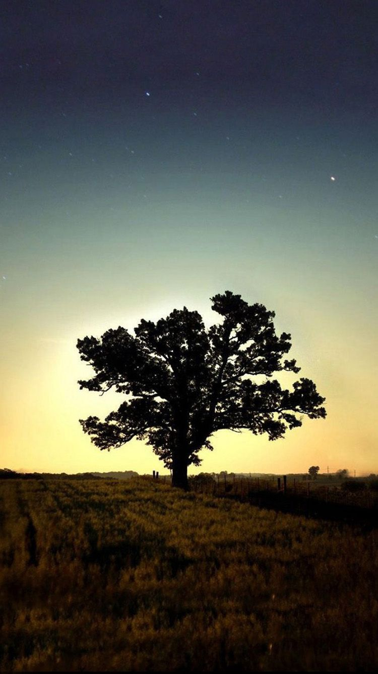 HD Tree Wallpapers/Backgrounds For Free Download 750×1334