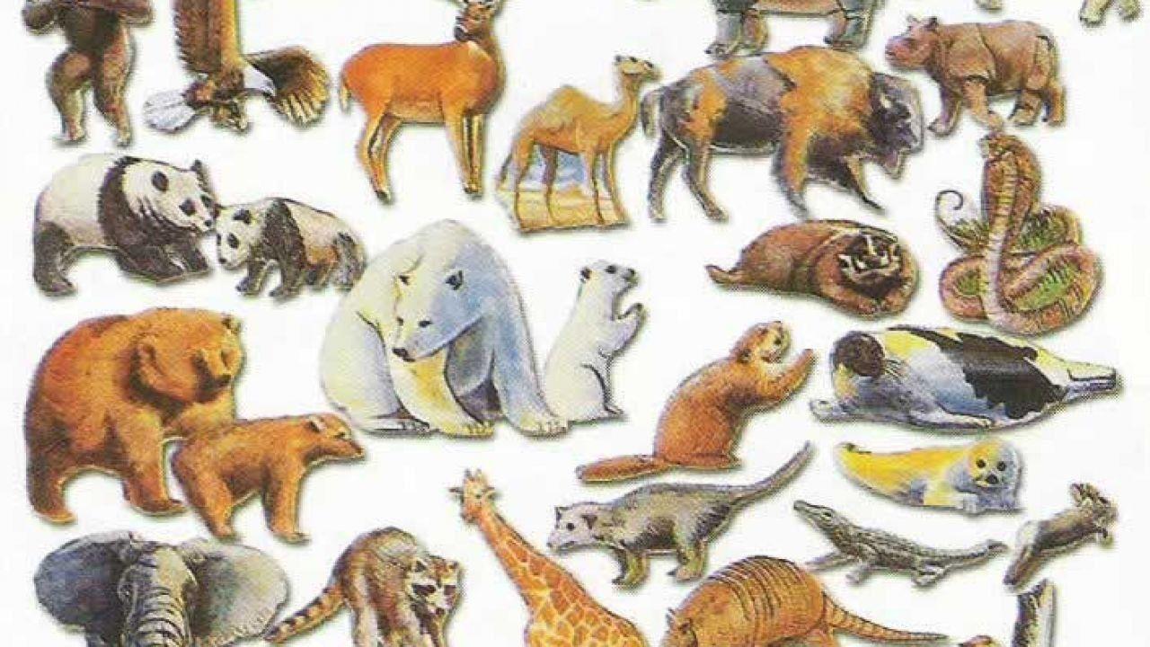 لماذا خلق الله الحيوانات Wild Animals Pictures Animals Wild All Animals Images