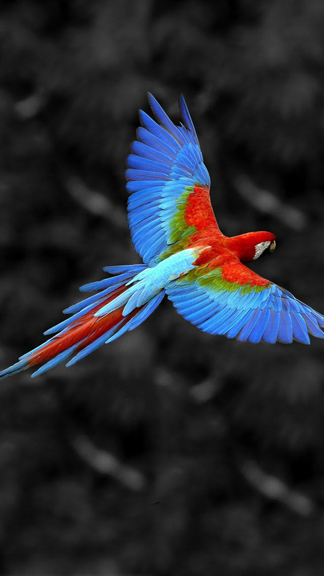 Wallpapers Animals Scarlet Macaw Parrot Pictures Funny Doblelol Com Macaw Macaw Wallpaper Macaw Parrot