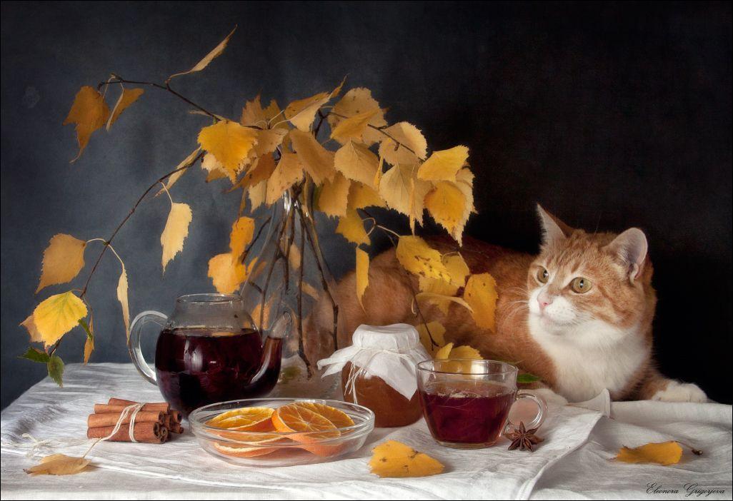 повреждении картинки коты осень утро как сальные