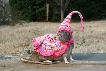 Cutest KnitCrochet Ever   Pet rats, Pet clothes, Cute rats