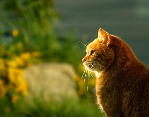 Hindi Names For Male Cats With Meanings Cats Names For Male