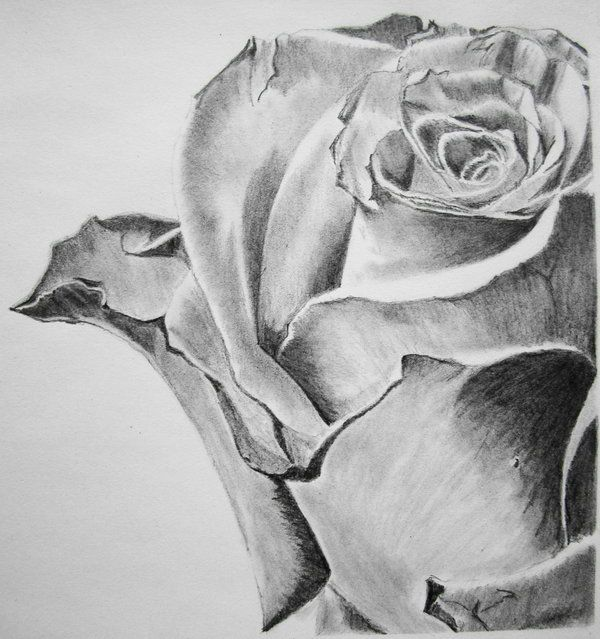 Pencil art of rose beautiful flower drawings for inspiration http hative