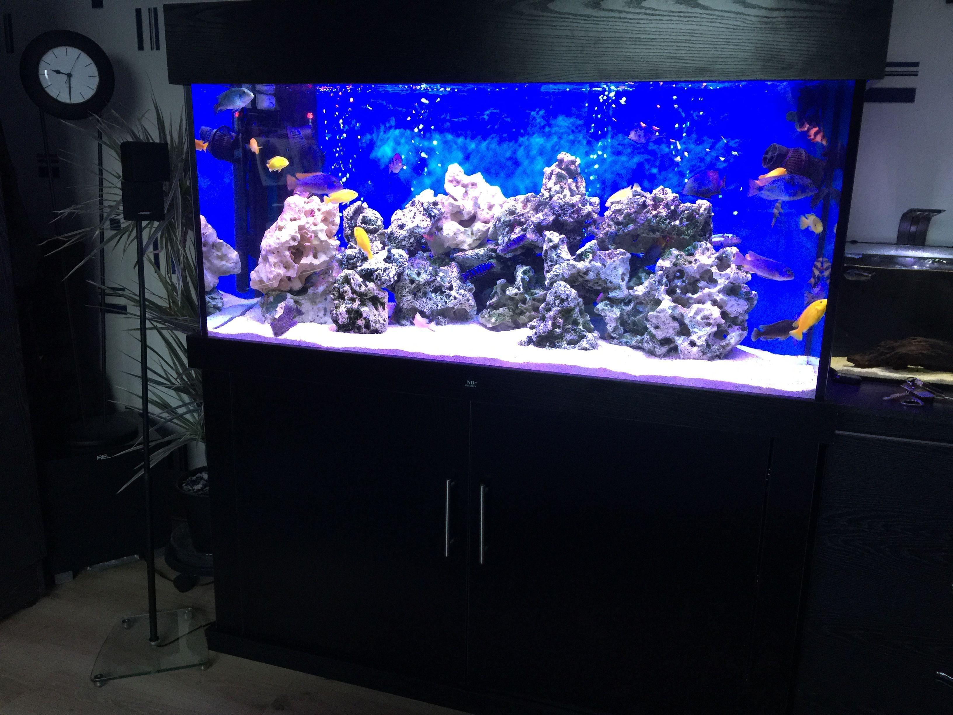 48 x 24 x 24 marine fish tank with cabinet made by nd aquatics