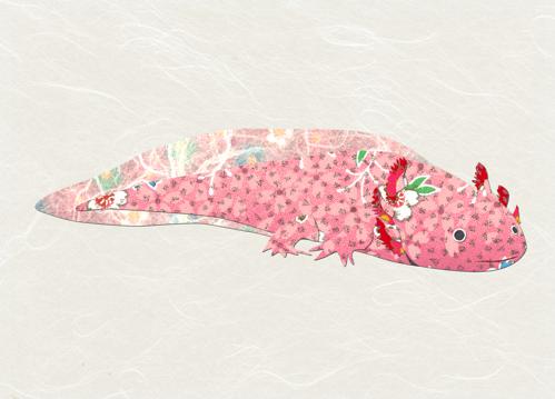 axolotl images ese aesthetic biology art pink