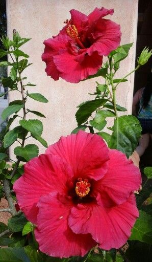 Beautiful flowers spotted at Universal Studios, Orlando, Florida.