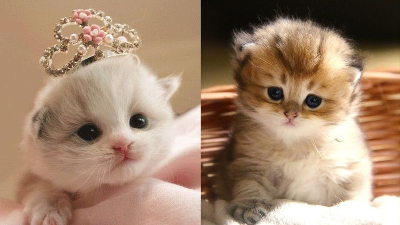 Baby Cats A Funny And Cute Baby Kittens Video Compilation