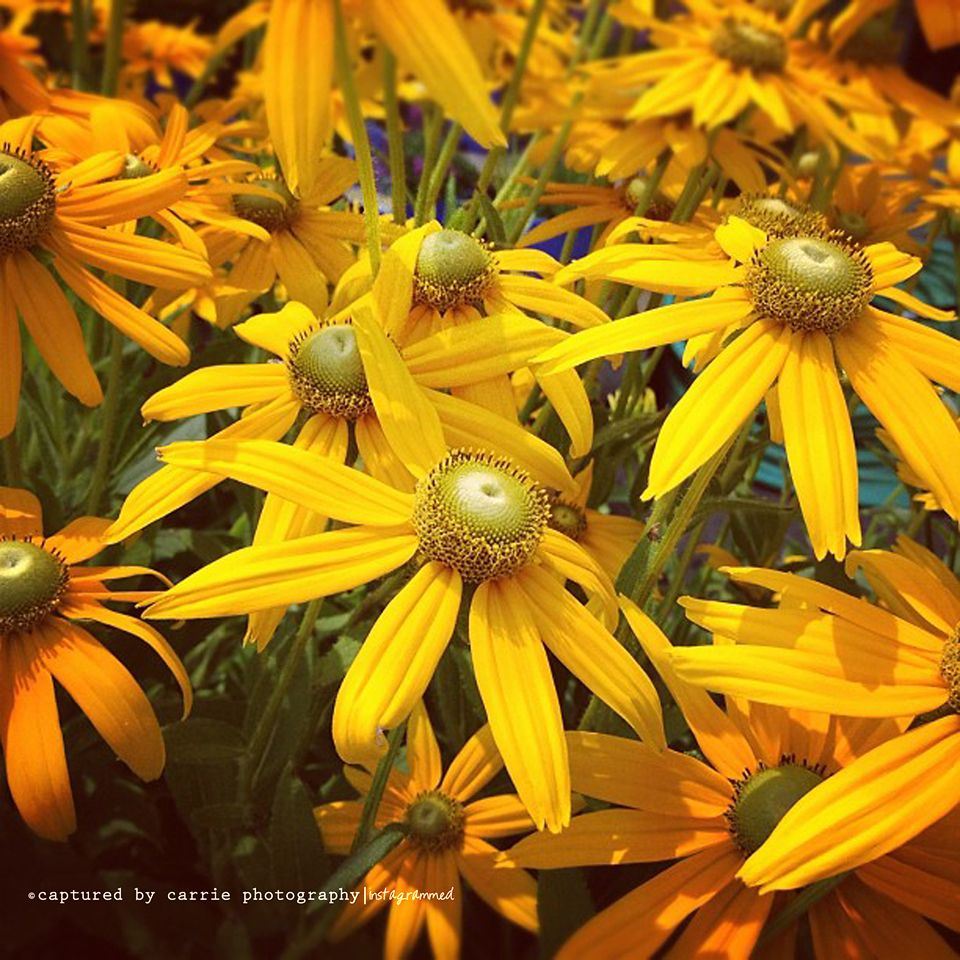Happy First Day of Summer!!! :)  Image by © Captured By Carrie Photography  http://www.facebook.com/CapturedByCarriePhotography