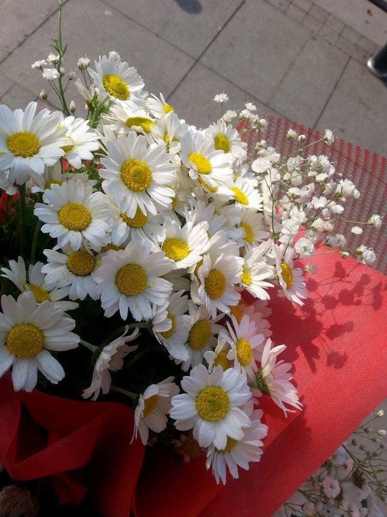 Pin by Ketevan Aydın on Daisy_ გვირილა | Pinterest | Flowers ...