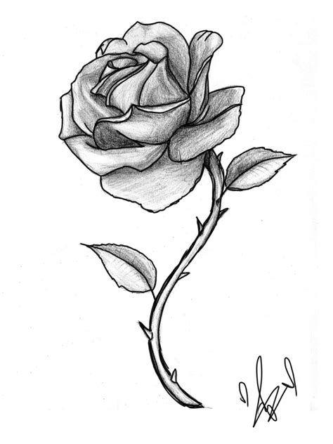 Rose avec tige dessin ecosia flowers rose sketch - Rose avec tige ...