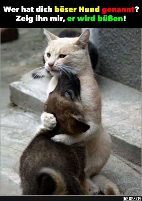 Besten Bilder, Videos und Sprüche und es kommen täglich neue lustige Facebook … – Hund Katze