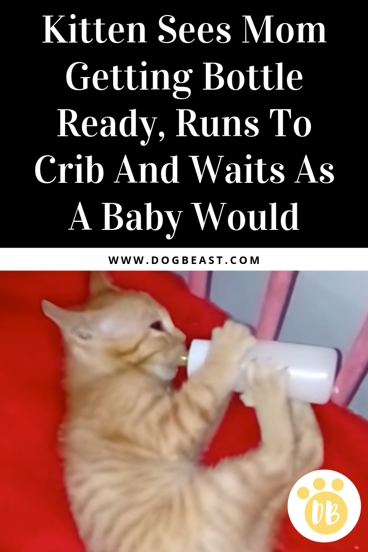 Kitten Sees Mom Getting Bottle Ready Runs To Crib And Waits As A Baby Would Dogbeast Kitten Animal Stories Kitten Love