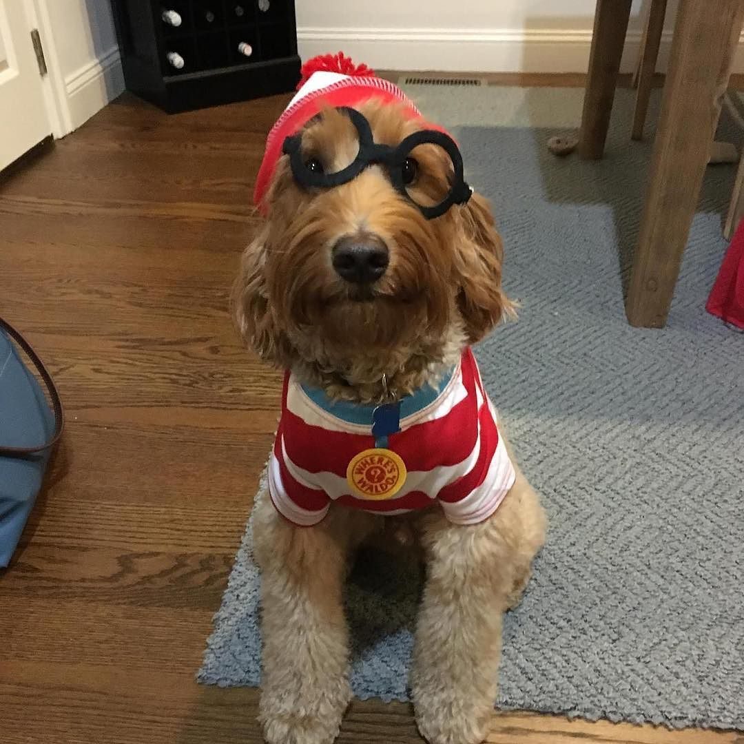 Happy #TBT from Baby Fred seen here in his amazing 2016 Howl-O-Ween costume. Don't forget about our upcoming FREE Ghouls Gimlets & Grrrowlers event on Thursday Oct. 26 at 6pm. There will be refreshments for all & a costume contest for the pups. See you there!