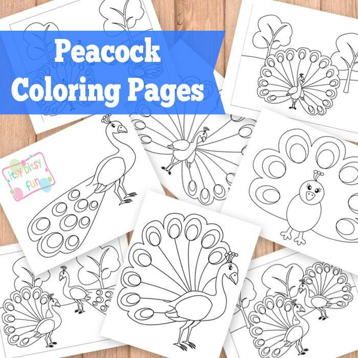 Peacock coloring pages peacocks free printable and free for Peacock crafts for adults