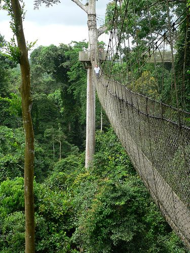 Kakum Canopy Walk Ghana. I want to go back to ghana soooo bad. & Kakum Canopy Walk Ghana. I want to go back to ghana soooo bad ...