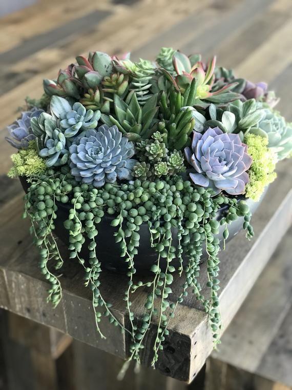 Succulent Centerpiece-Housewarming birthday gift. Large Statement Centerpiece Black OR Bronze Planter w/ Live Succulents #shadecontainergardenideas