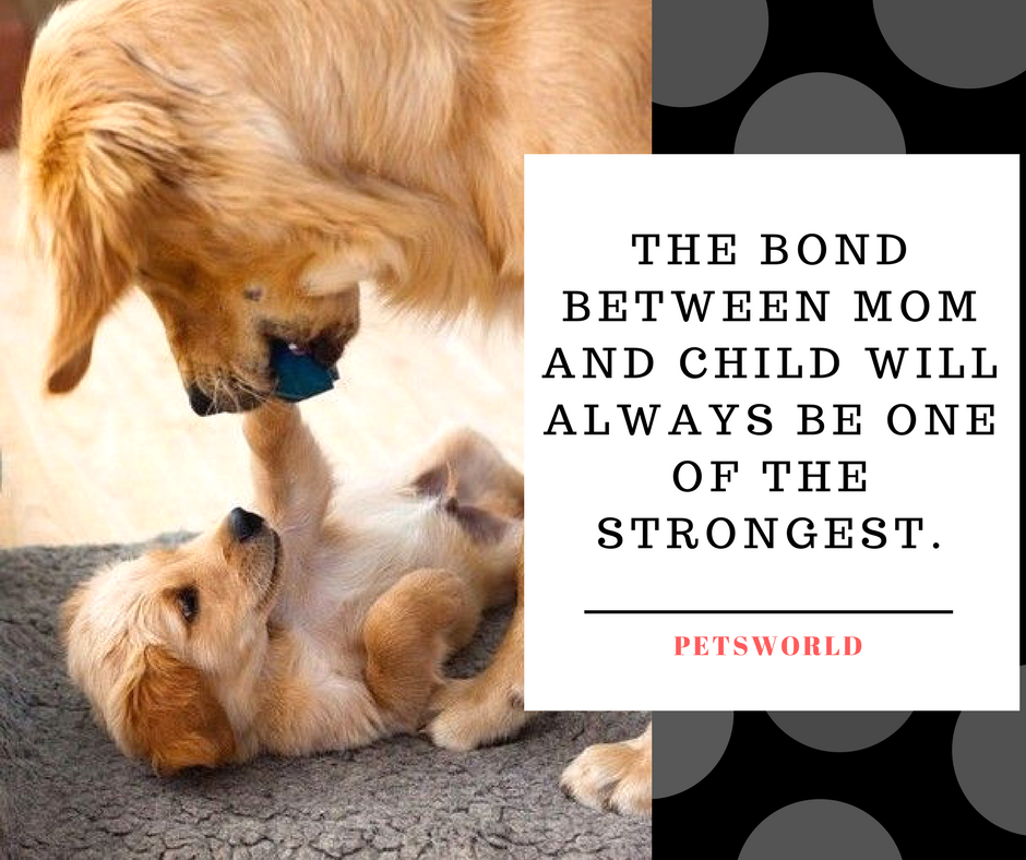 True That 3 A Mother S Love Is Unconditional Unselfish And Knows No End 3 Petsworld Dogmom D Animal Love Quotes Cute Animals With Funny Captions Buy Pets