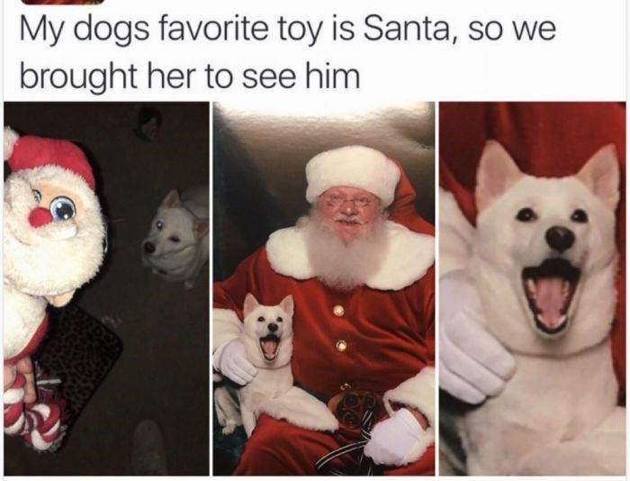 23 Holiday Animal Memes As A Forewarning Of What's To Come And To Bring You Joy, Obviously (Day 23)