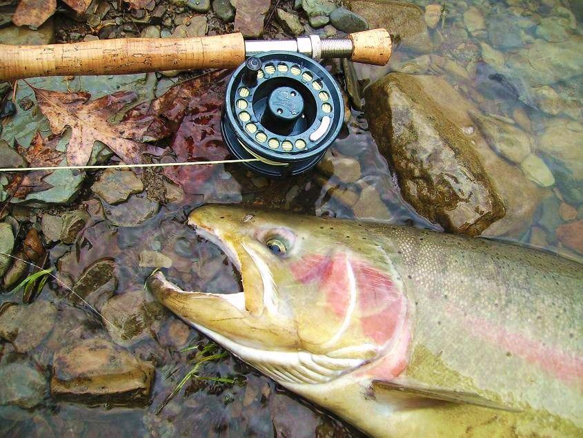 I Love Swinging Grand River Steelhead Fishing Fishing Adventure Steelhead