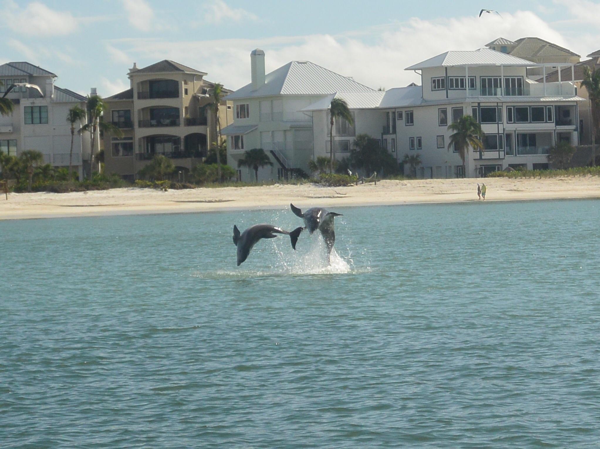 Dolphin off of bonita beach fl httpifttt2mrzduv