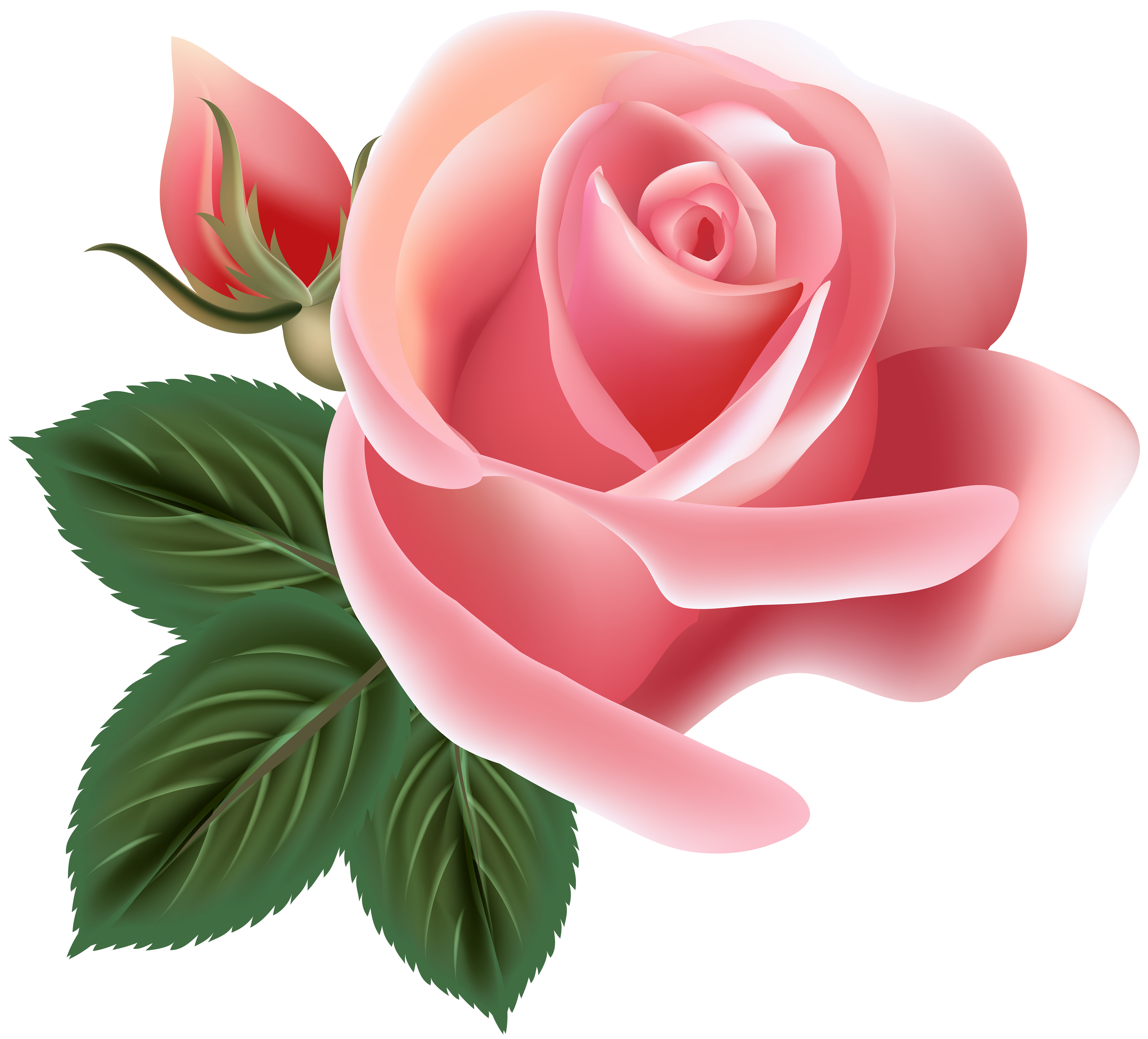 Pink Rose Clip Art Png Image Flower Clipart Flower Art Flower Painting