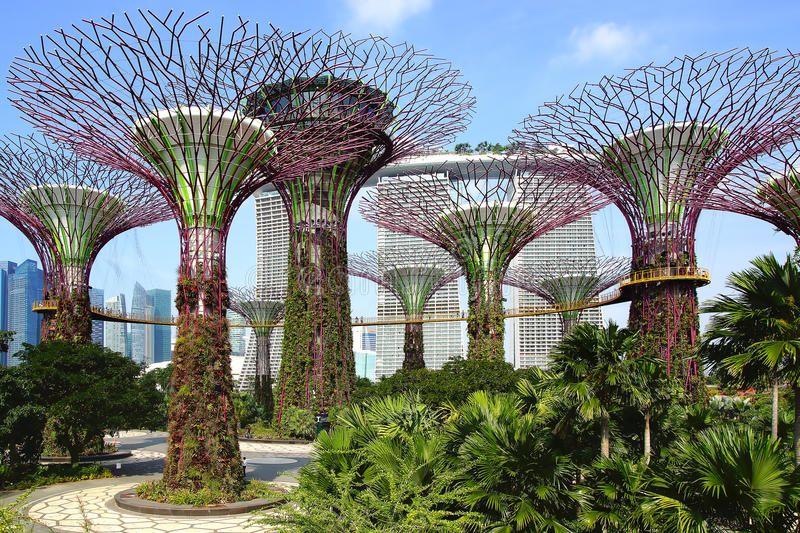 Supertree Grove Singapour Singapore Garden Gardens By The Bay Organic Gardening