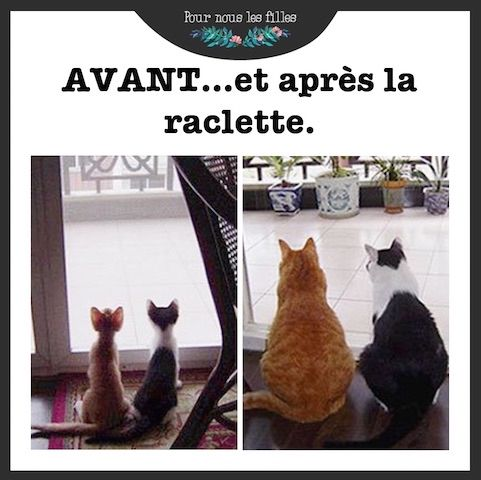 Raclette | Humour, Blague chat, Image drole animaux