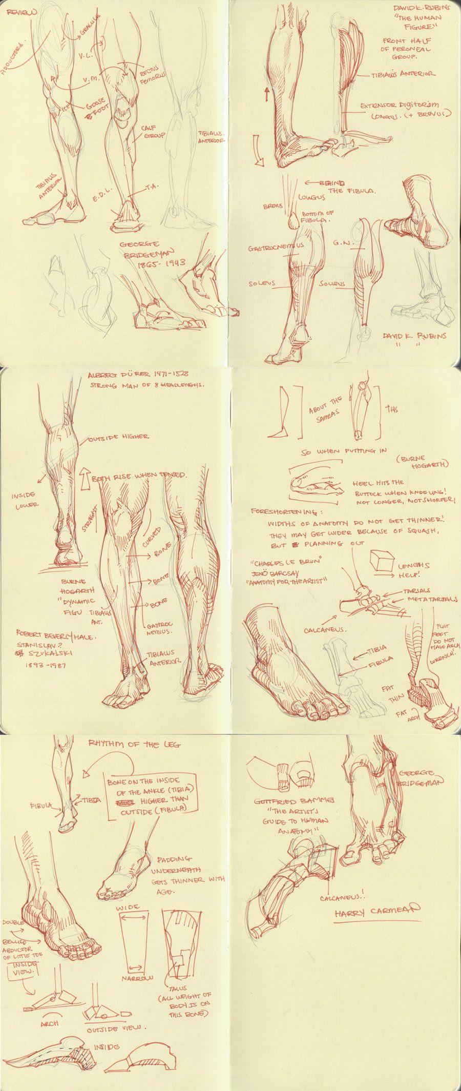 anatomy dump 2 by kakimari.deviantart.com on @deviantART   Study ...