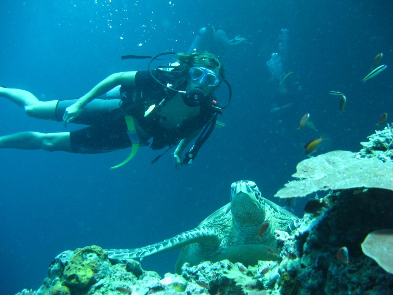 Utila, Bay Islands Best Spot for Divers