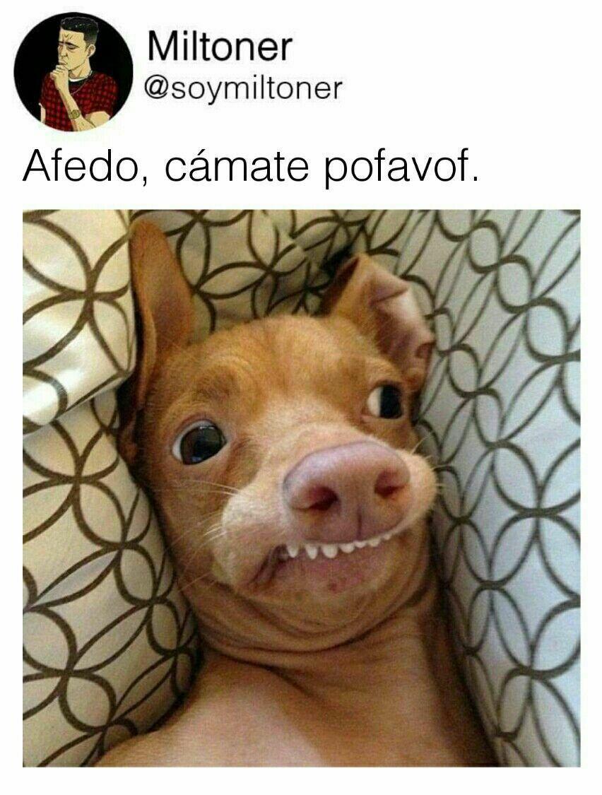 Pin De Joseline Montenegro En Memes Memes De Perros Graciosos Animales Bonitos Imagenes Divertidas De Animales