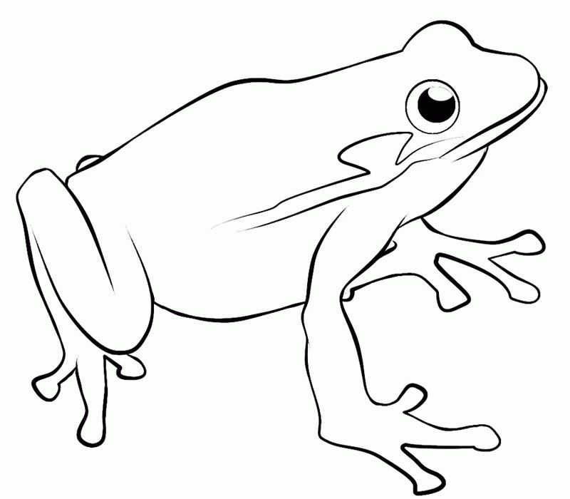printable frog coloring pages free frog coloring pages to print out and color free printable frog