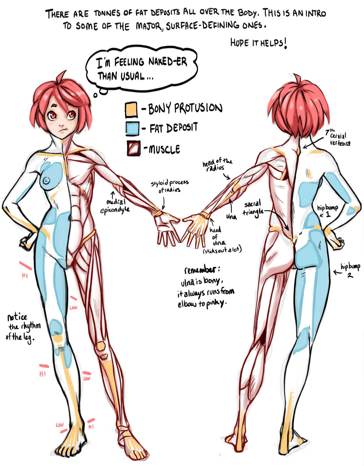 guide to surface quality showing: fat, bones & muscle. artist ...
