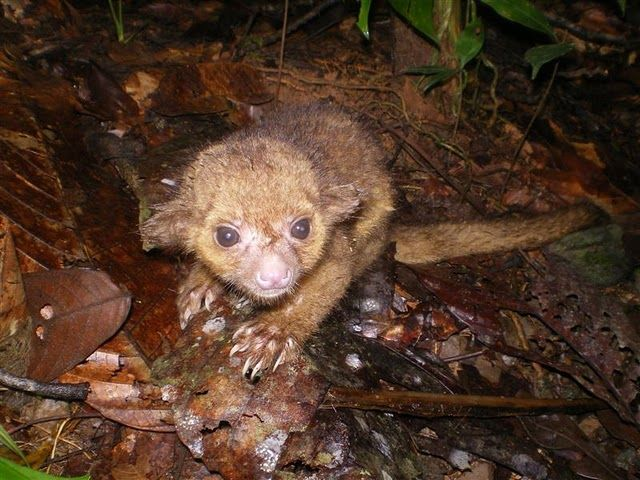 Pin On Animals Exotic Wild