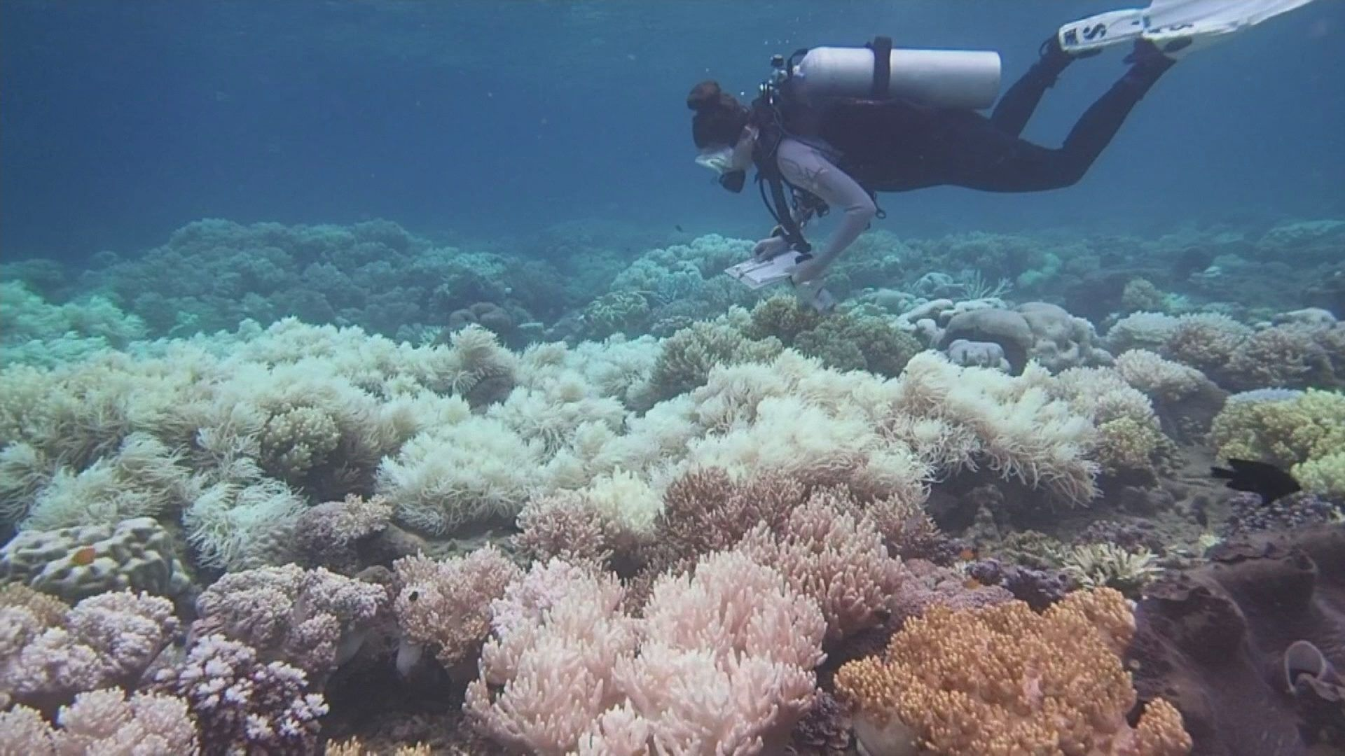 Great Barrier Reef damaged by climate change Great