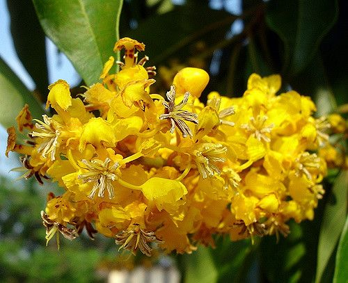 Flor Do Cerrado Brazilian Savannah Flower Flores Plantas