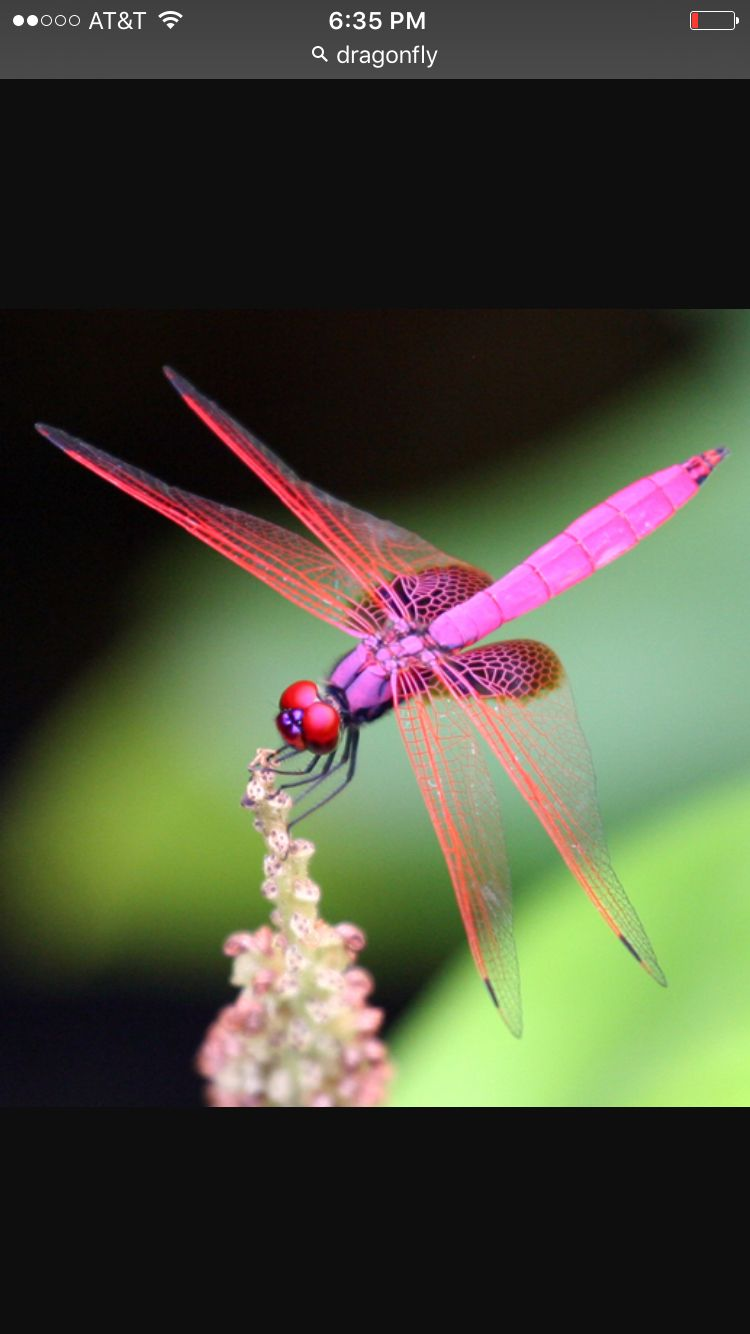 Pin by Keisha Garrison on Ink & Love | Dragonfly symbolism