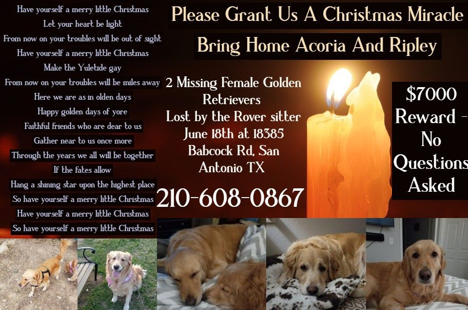 2 Missing Golden Retrievers San Antonio 7k Reward Need A
