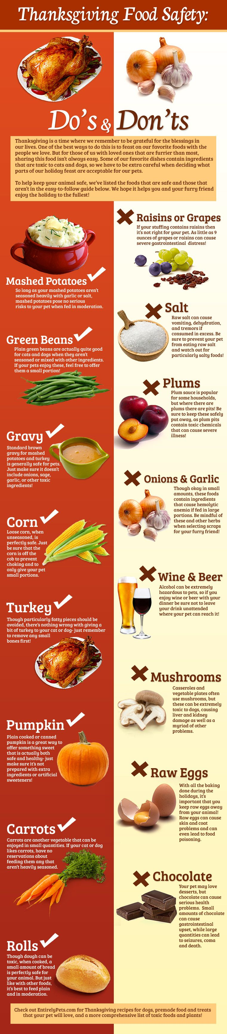 What You Should And Shouldn T Feed Your Pet This Thanksgiving Thanksgiving Infographic Food Infographic Pet Holiday