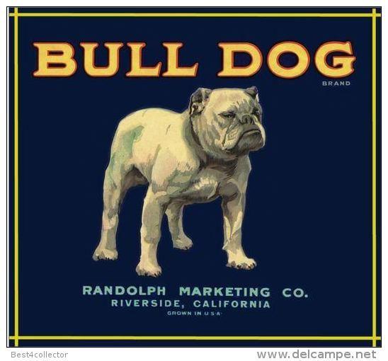 Pin By English Bulldog Puppies On English Bulldogs Bulldog Dog