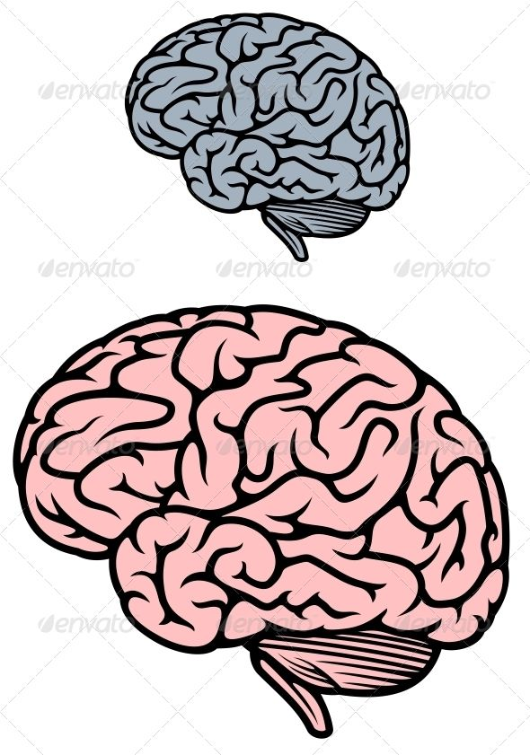 Human Brain #GraphicRiver Human brain isolated on white background ...