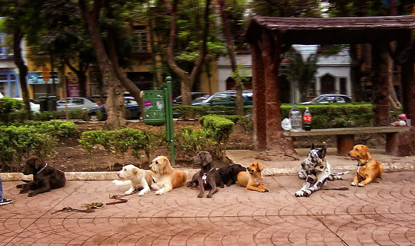 Perros de La Condesa