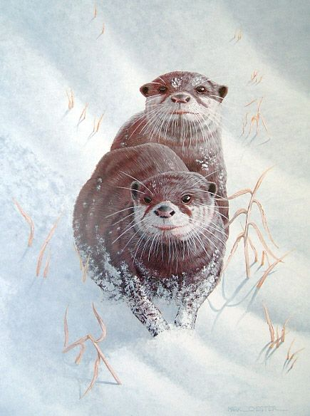 Mark Chester. Snow Otters