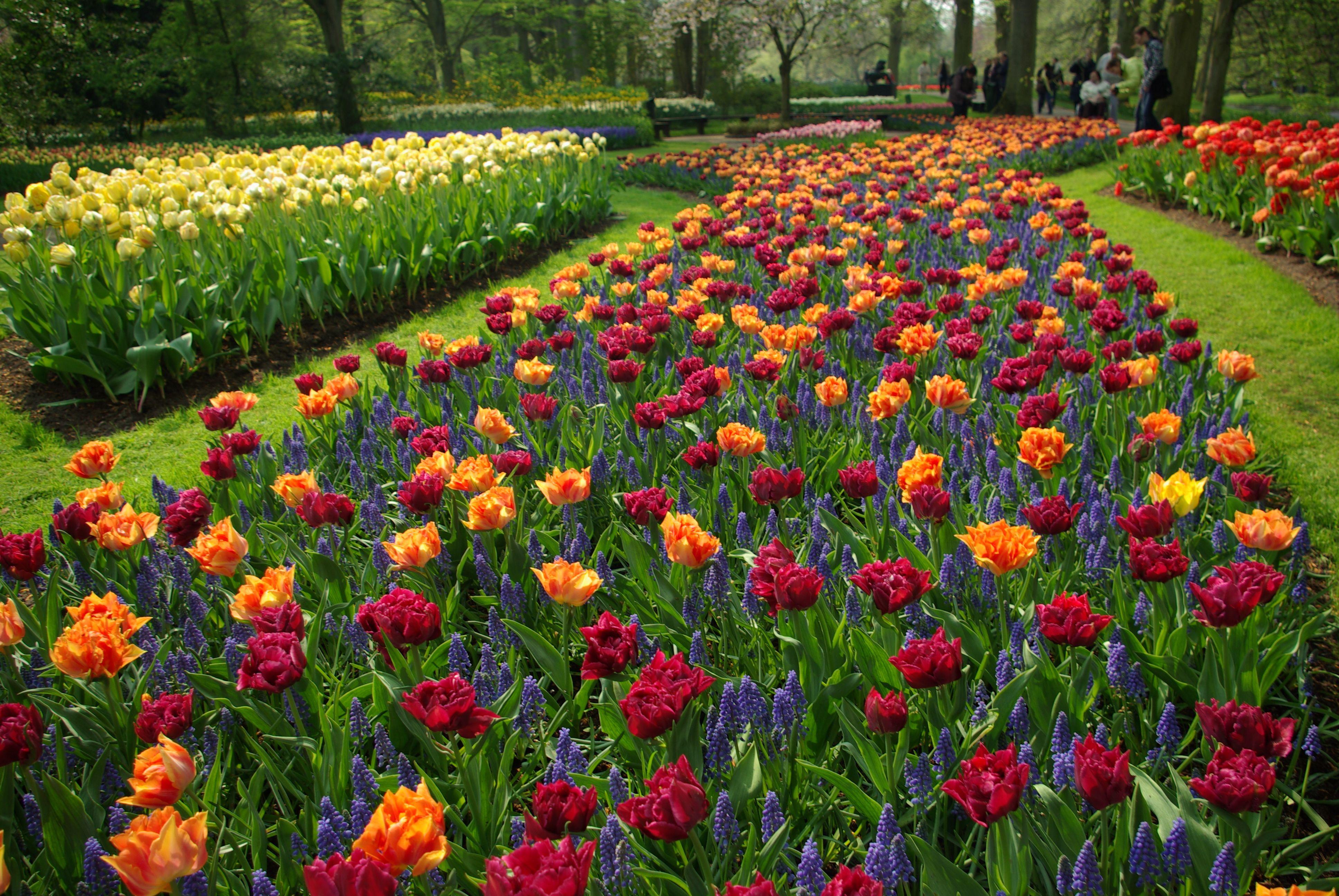 flores naturales hermosas 5 flores