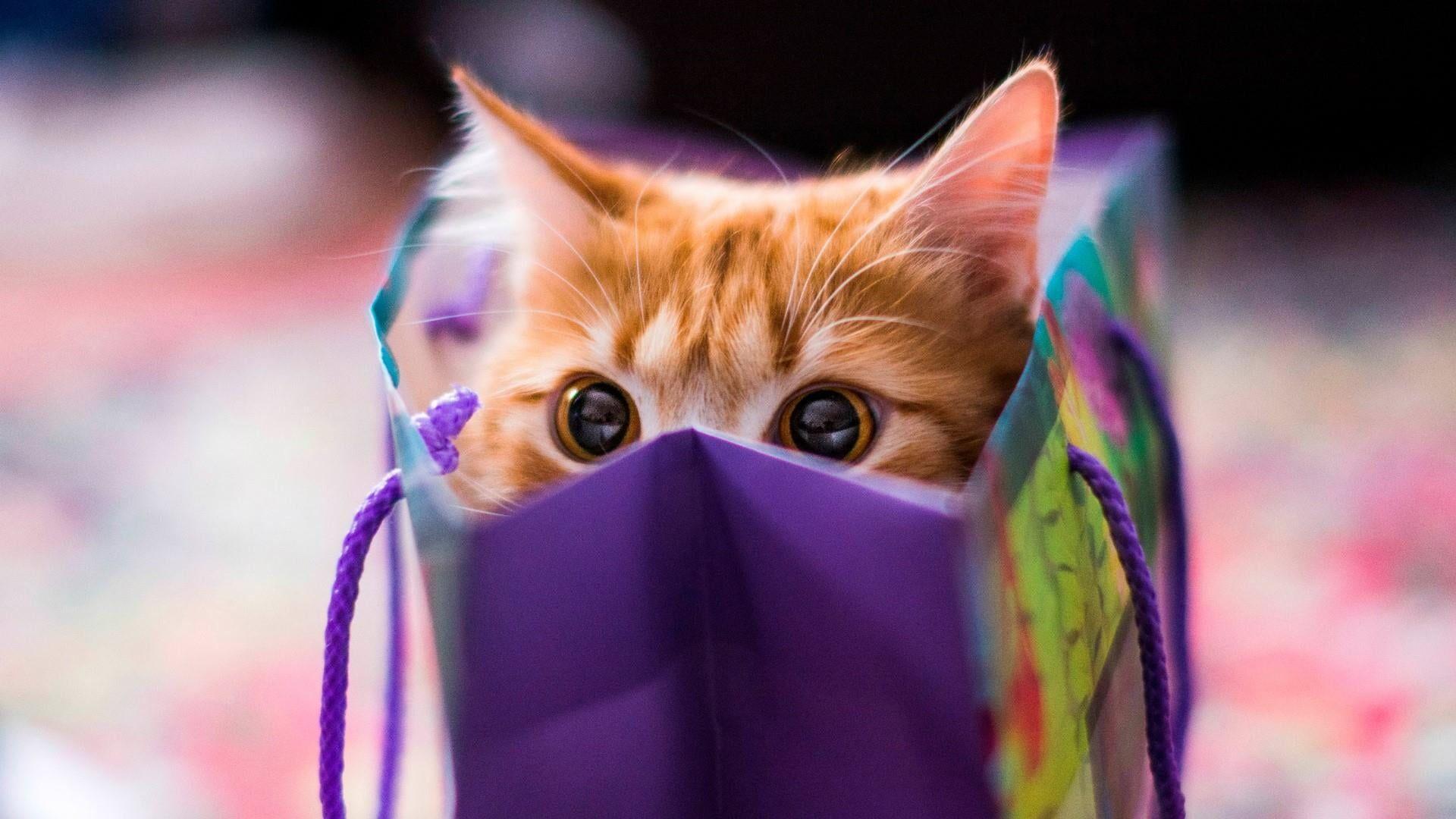 Kitty Kitten Cat Cuteness Cute Funny Bag Peep Peek 1080p Wallpaper Hdwallpaper Desktop In 2021 Kittens Cutest Cats Cats And Kittens Cute kitty hd wallpaper