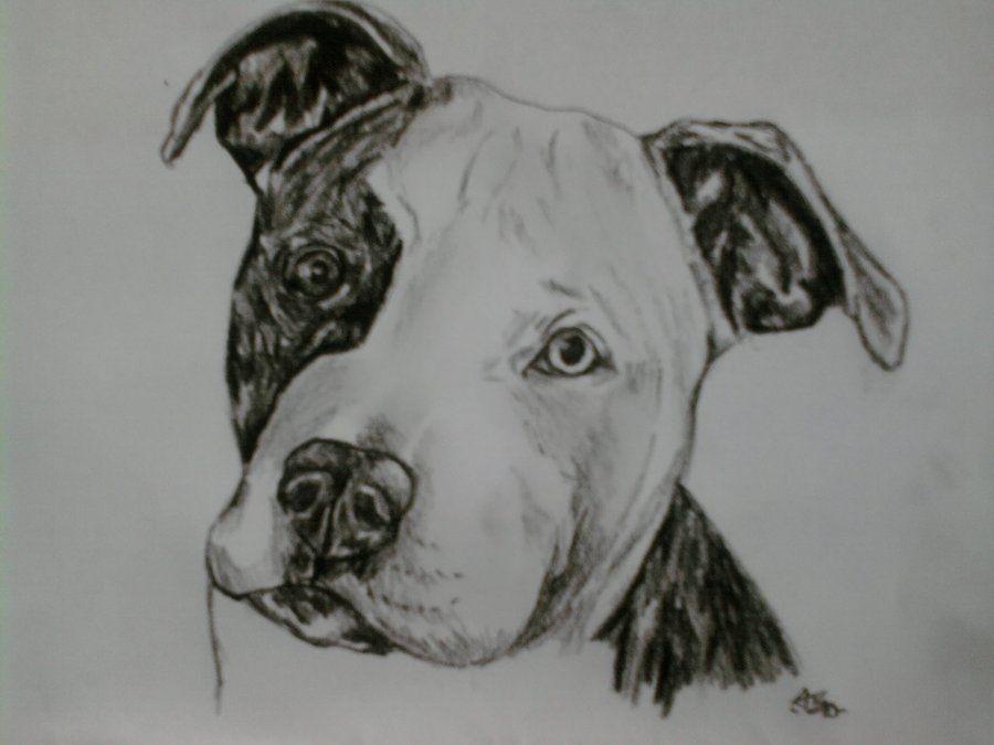 Pitbull Puppy Portrait By Sugarskull Tattoos Jpg 900 675 Cool