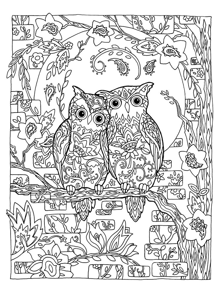 Marjorie Sarnat Owl Coruja Para Colorir Desenhos E Desenhos