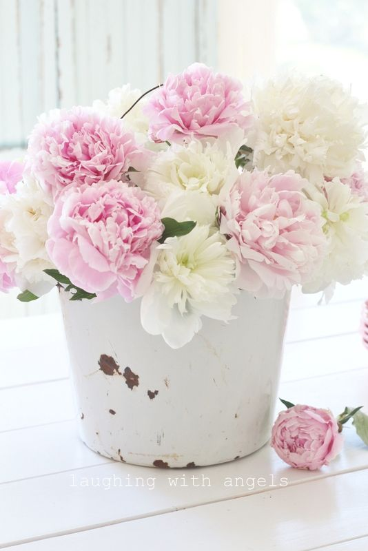 laughing with angels garden blooms fleurs flowers home flowers rh pinterest com