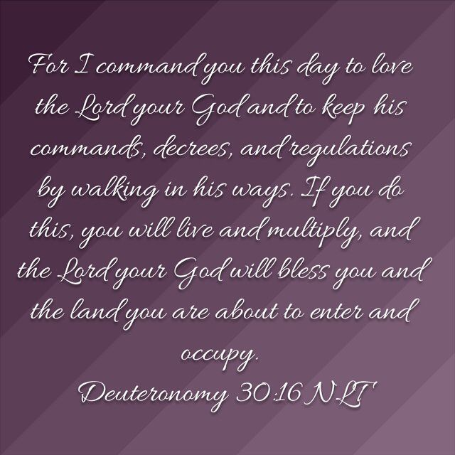 God Inspirational Quotes Adorable Pineddie Fitler On Jesus  Pinterest  Deuteronomy 30 Verses . Decorating Inspiration